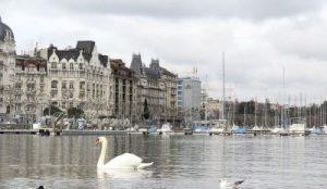 Genf mit Genfersee, Wohnungen und angelegte Schiffe. Schwan schwimmt auf dem See.
